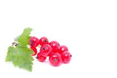 Röd vinbär med det gröna bladet som isoleras på vit bakgrund Arkivfoton
