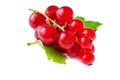 Röd vinbär med leafen som isoleras på vit Arkivbilder