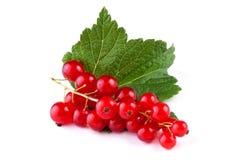 Röd vinbär med leafen som isoleras på vit Arkivfoto