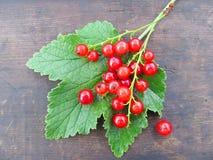 Röd vinbär på ett grönt blad Royaltyfri Foto