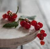 Röd vinbär på makroen för ljus för morgon för bär för sommar för ställningsträtabell royaltyfria bilder
