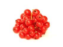 Röd vinbär Royaltyfri Bild