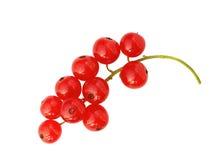 Röd vinbär som isoleras på vit Arkivfoton