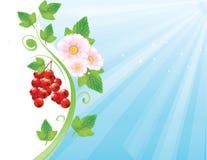 Röd vinbärbakgrund Royaltyfria Foton