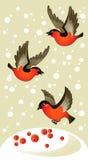 röd vinter för bakgrundsdomherrear Royaltyfria Foton