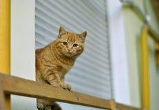 Röd vit gullig katt Arkivfoton