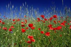 röd weed Fotografering för Bildbyråer