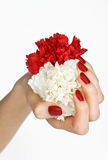 röd white för blommamanicure arkivbild