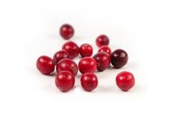 röd white för cranberry arkivfoton