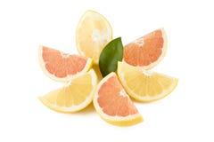 röd white för grapefruktdelar Royaltyfri Bild