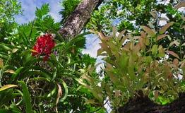 röd white för isoleringsorchid Royaltyfri Foto