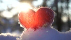 Röd woolen hjärta på snön och backlighted av vinterinställningssolen långsam rörelse