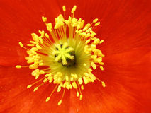 röd yellow för contrast Royaltyfri Bild