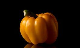 röd yellow för peppar Royaltyfri Bild
