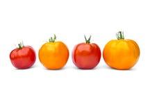 röd yellow för tomater två royaltyfria bilder