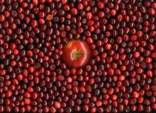 röda äpplecranberries arkivfoto