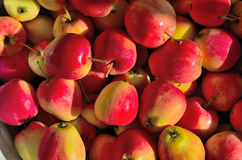 Röda äpplen. Arkivbilder