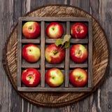 röda äpplen collage arkivbild