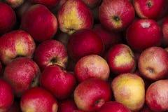 Röda äpplen efter regn Royaltyfria Bilder