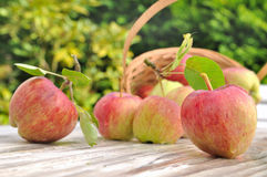 Röda äpplen för friskhet Fotografering för Bildbyråer