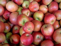 Röda äpplen för Ida royaltyfri bild
