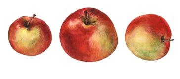 röda äpplen Hand dragen vattenfärgmålning Royaltyfri Fotografi