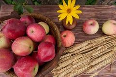 Röda äpplen i en korg och och öron arkivbild