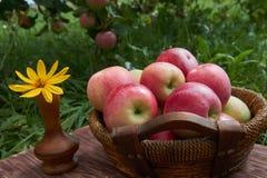 Röda äpplen i en korg på den gamla trätabellen fotografering för bildbyråer