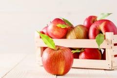 Röda äpplen i en ljus träask Fotografering för Bildbyråer