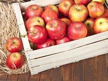 Röda äpplen i en träask arkivfoton