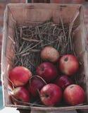 Röda äpplen i en träask med sugrör Arkivfoton