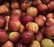 Röda äpplen i korg Fotografering för Bildbyråer