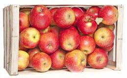 Röda äpplen i träask royaltyfri bild