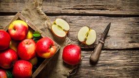 Röda äpplen i träask med kniven Fotografering för Bildbyråer