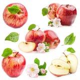 Röda äpplen med blommor Arkivbild