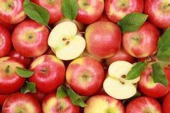 Röda äpplen med leaves royaltyfria bilder