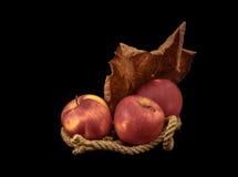 Röda äpplen på en svart bakgrund Fotografering för Bildbyråer