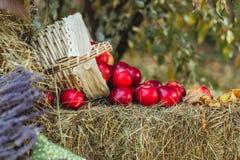 Röda äpplen på höstack arkivfoto