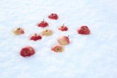 Röda äpplen på ny fluffig snö arkivbilder