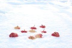 Röda äpplen på ny fluffig snö royaltyfri bild