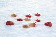 Röda äpplen på ny fluffig snö fotografering för bildbyråer