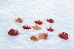Röda äpplen på ny fluffig snö arkivbild