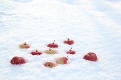 Röda äpplen på ny fluffig snö arkivfoton
