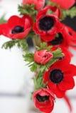 röda anemoner Arkivfoton
