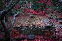 Röda Autumn Leaves vid dammet royaltyfri fotografi