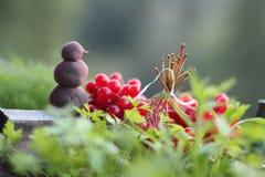 Röda bär av viburnumen på bakgrund för grönt gräs royaltyfri fotografi