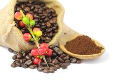 Röda bär för kaffebönor och grillat kaffe Arkivfoto