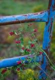 Röda bär och en rostad blåttport arkivfoton