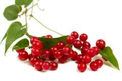 Röda bär som isoleras på vit Fotografering för Bildbyråer