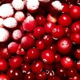 Röda bär som täckas med rimfrost royaltyfri fotografi